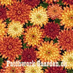 Autumn Album : Asters blomster