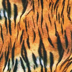 ANIMAL KINGDOM : Tiger Striber