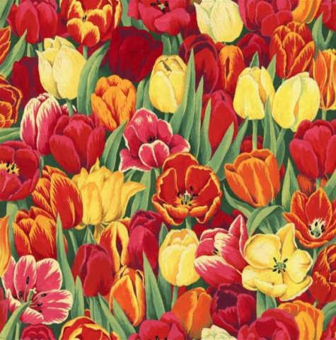 Tulips : Tulipaner