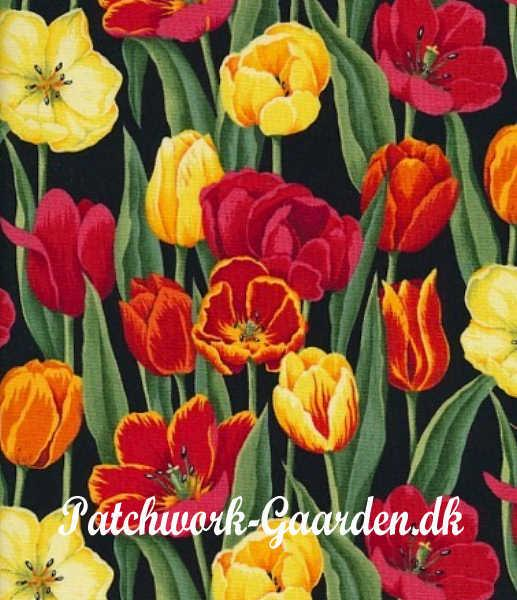 Flower heads : Tulipaner