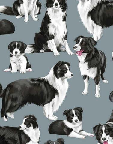 Dogs : Border Collie