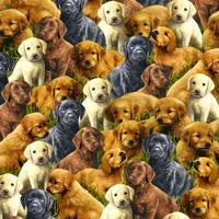 Loveable Labradors