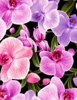 Orchids : Store Orchide Blomster