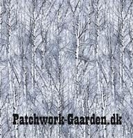 Icy Trees : Vinter skov